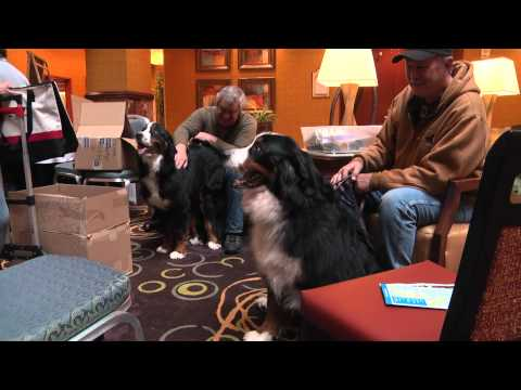 Hotel welcomes Bernese mountain dogs