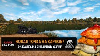 Русская Рыбалка 4 — Новая точка на Янтарном озере Цветные Карпы в прилове