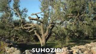 Dalmatian Dialect Poem: Suhozidi