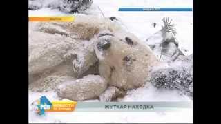 Десятки мёртвых животных нашли зоозащитники в мусорном контейнере в Братске
