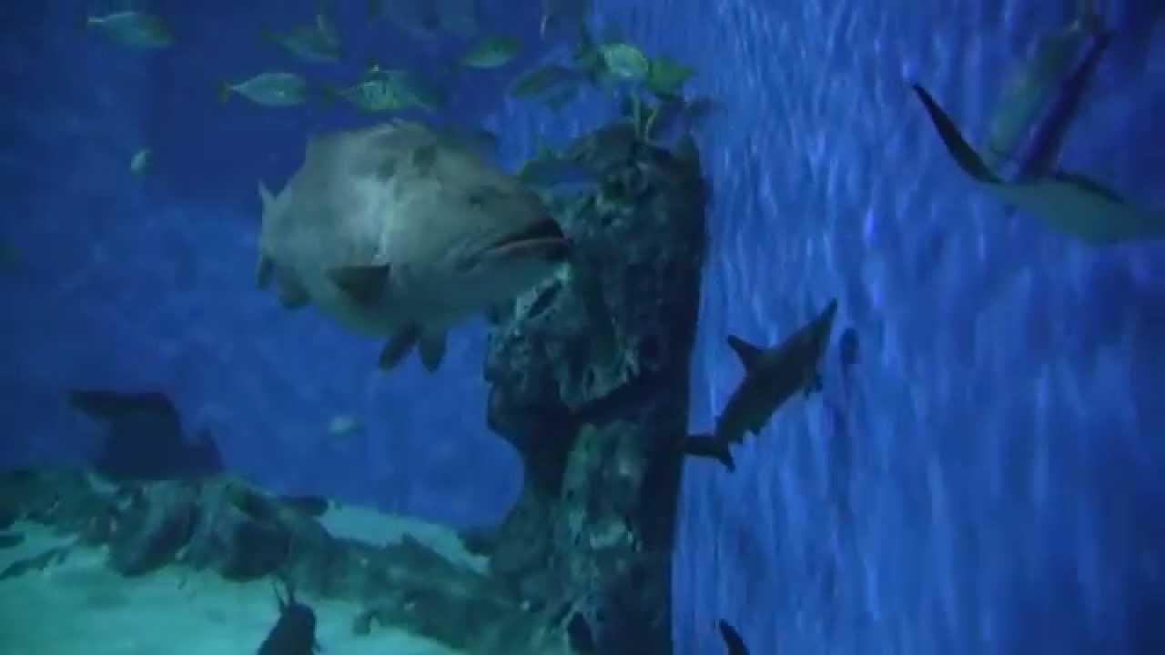 Den Bl? Planet - National Aquarium Denmark 7/ - YouTube
