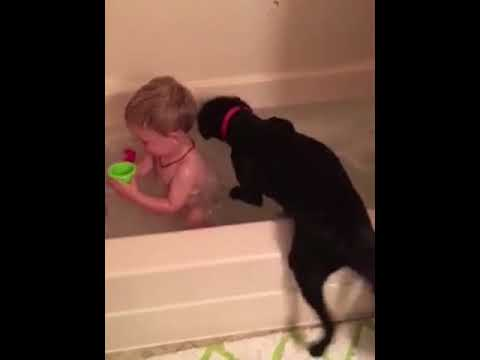 Dog Jumps into Baby's Bath, Baby Can't Stop Laughing