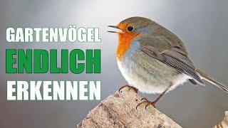 10 Gartenvögel und ihr Gesang | Vogelstimmen lernen