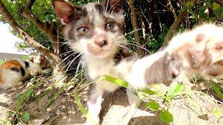 【子猫プロレス】母猫の留守中に4匹の子猫がタッグマッチで大暴れ!