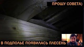 видео Домовый гриб