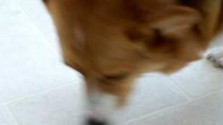 Yassy's Gourmet Dog Kitchen:i Cannot Hear You. Kangaroo Jerky