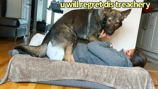 Funny Human Stealing Dogs Bed