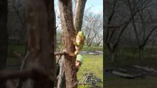 Древесная лягушка в саду ЕлеНика.