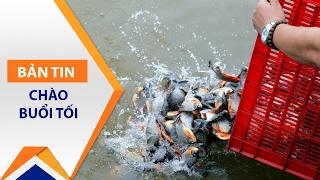 Phóng sinh cá chim trắng: Nguy hại thế nào? | VTC