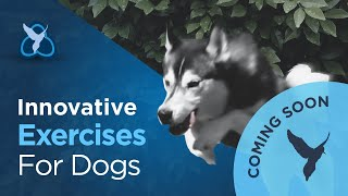 Canine Rehab advert 1