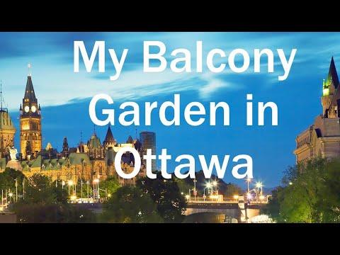 My Balcony Garden in Ottawa August 30 2014
