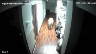 Побег собаки