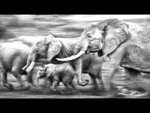 Ten Walls - Walking With Elephants (Original)