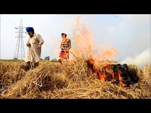Indian farmers burn crop stubble despite Delhi ban | AFP
