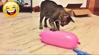 СМЕШНЫЕ ЖИВОТНЫЕ 😂 ЛУЧШИЕ ПРИКОЛЫ 2020! Смешные видео - Смешные коты приколы с котами до слез #3