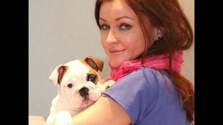 Английский бульдог. ЛюбоФФ на всю жизнь. PR company BulldogFILL (БульдоГФИЛ) Купить щенка.