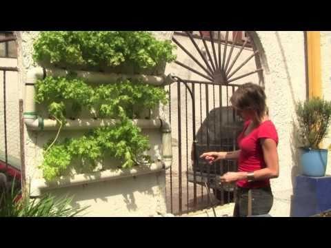 Sembradores Urbanos // Urban Farmers