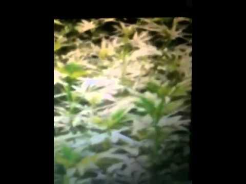 Organic Grower Vs Chem Grower: Real or Fake?