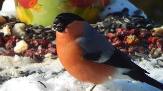 Птицы в дикой природе  Фото птиц с названиями