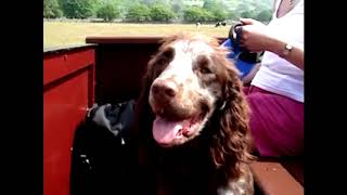 My Dogs Holiday to Cumbria (Lake District)