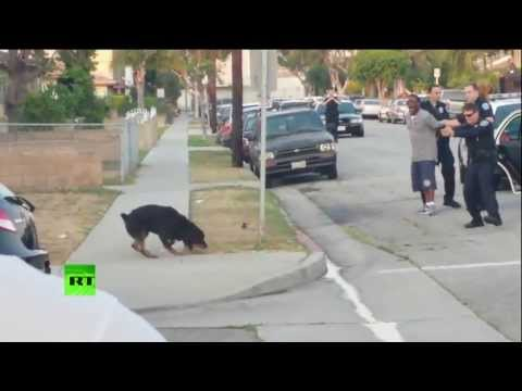 Cops arrest man for filming them and then kill his dog