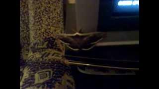 видео Жучки на подоконнике. Кто они?