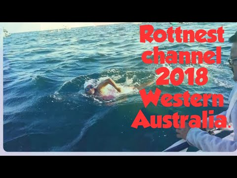 Rottnest channel swim 2018