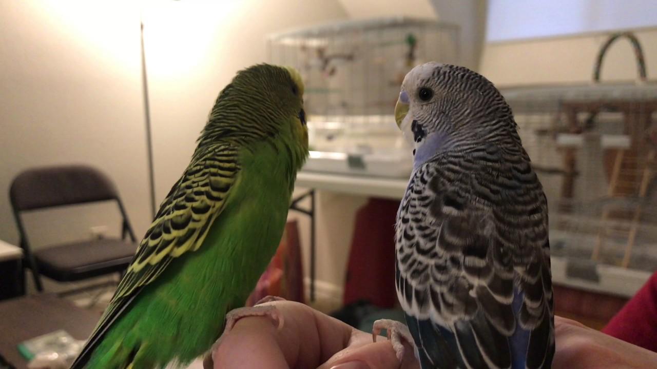 Kiwi lectures pixel kiwi talks to a chandelier both birds eat kiwi lectures pixel kiwi talks to a chandelier both birds eat apple arubaitofo Images