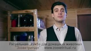 Zoovetritual кремация животных