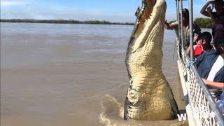Top 10 Biggest Crocodiles Ever caught in the world 2018