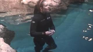 New England Aquarium Penguin Talk 8-13-14