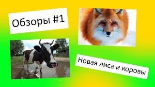 Обзоры #1 I Новая лиса и коровы