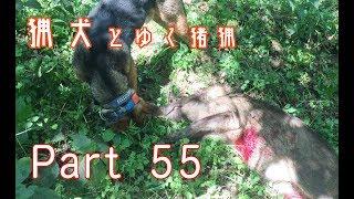 本動画では猟犬と猟師による 狩猟(猪猟)が行われている映像があります ※...