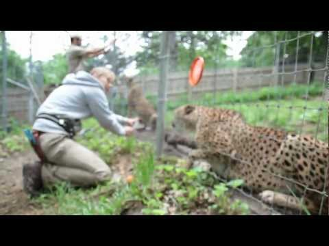 Training at Omaha's Henry Doorly Zoo