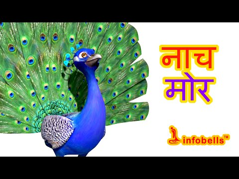 नाच मोर । Peacock Hindi Rhymes for Children