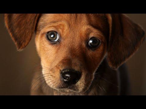 Bob Delmont - Dogs will help you live longer!!  TRUE!!