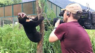 Filming Baby Sun Bears Is NOT Easy! | Bears About The House | BBC Earth