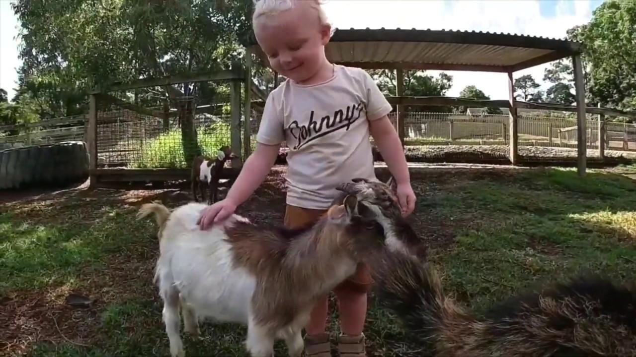 Golden Ridge Animal Farm, Dural, Sydney