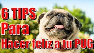 6 Tips para hacer feliz a tu Pug