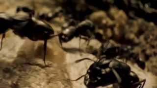 ATTACK OF THE ANTS Movie Trailer