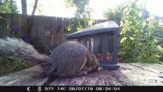New squirrel peanut feeder - part 2: C'mon, guys, I know you're smarter than this!