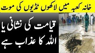 Khana Kaaba per Tidion Ka Hamla Asal Haqeeqat | Studio One