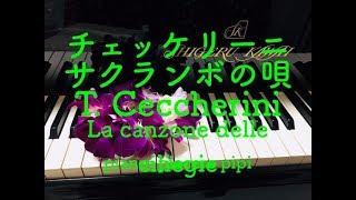 サクランボの唄♪ チェッケリーニ La canzone delle ciliegie T.Ceccherini.