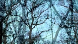 """Der Domestizierte Mensch """"Im dunklen Wald wohnt der Irrsinn"""""""