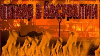 Правда о Пожаре в Австралии 2020 предъява Моргенштерну за погибших животных