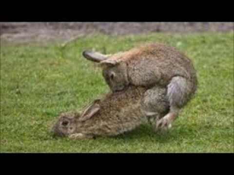 Lists of 12 ~ 12 Funny & Hysterical pics of Animals Mating ~ HYSTERICAL!!