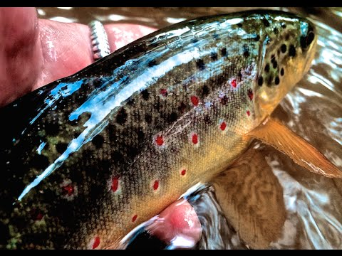 "w4f - fly fishing ""tips for wild trout in small streams"" - youtube, Fly Fishing Bait"