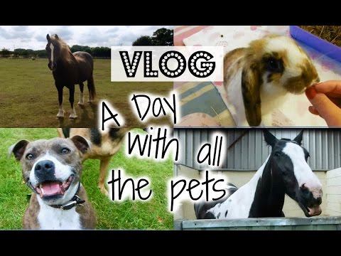 Vlog | A Day WIth All Of The Pets