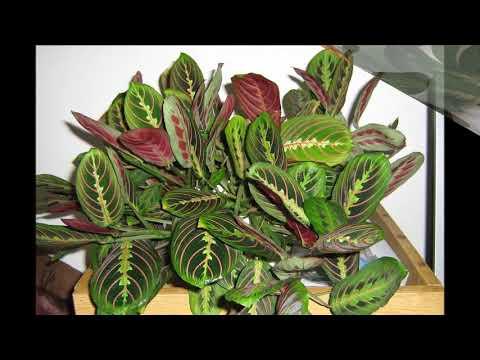 20 неприхотливых  комнатных растений  Фото + Названия