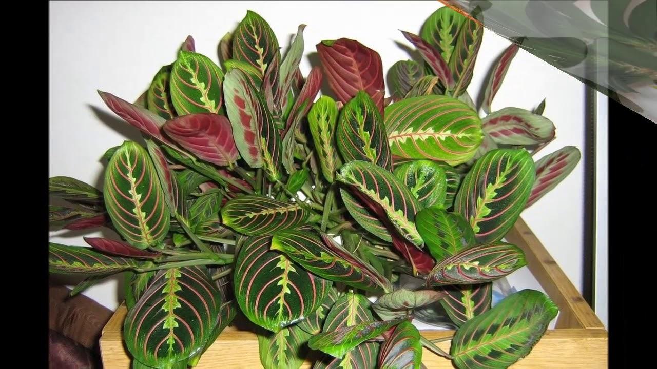 20 неприхотливых комнатных растений Фото + Названия - YouTube